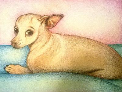 Zoila colored pencils zoila pencil drawing draw chihuahua dog