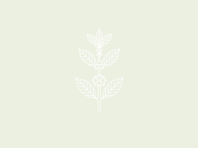 Coffee Plant coffee bar line art icon illustration logo design logo branding brand and identity plant coffee plant coffee