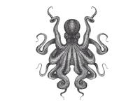 Octopus - DEEP Branding WIP