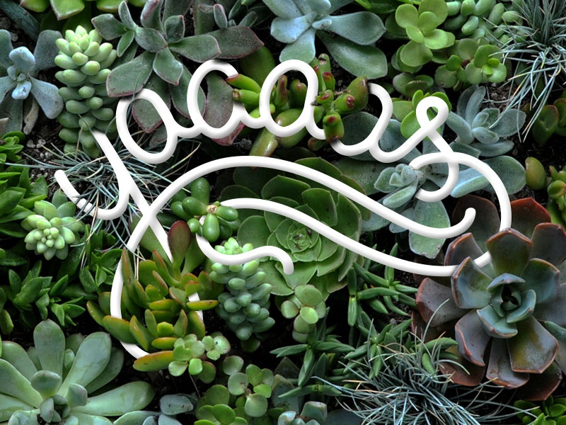 Yaaaas typography cactus plants lettering yas
