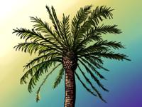 Palm Trees #10
