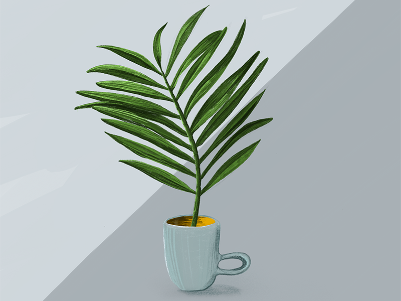 Palm #11 sketch drawing green plant the100dayproject procreate illustration palm tree palm illustrator