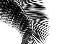 Palm017 dribbble