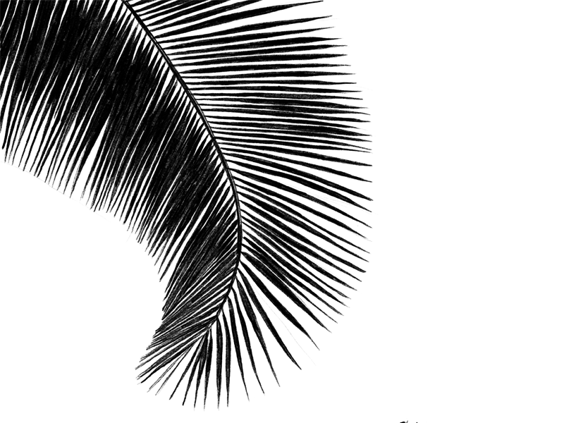 Black and White Palm palms silhouette white the100dayproject black and white black palm tree illustration