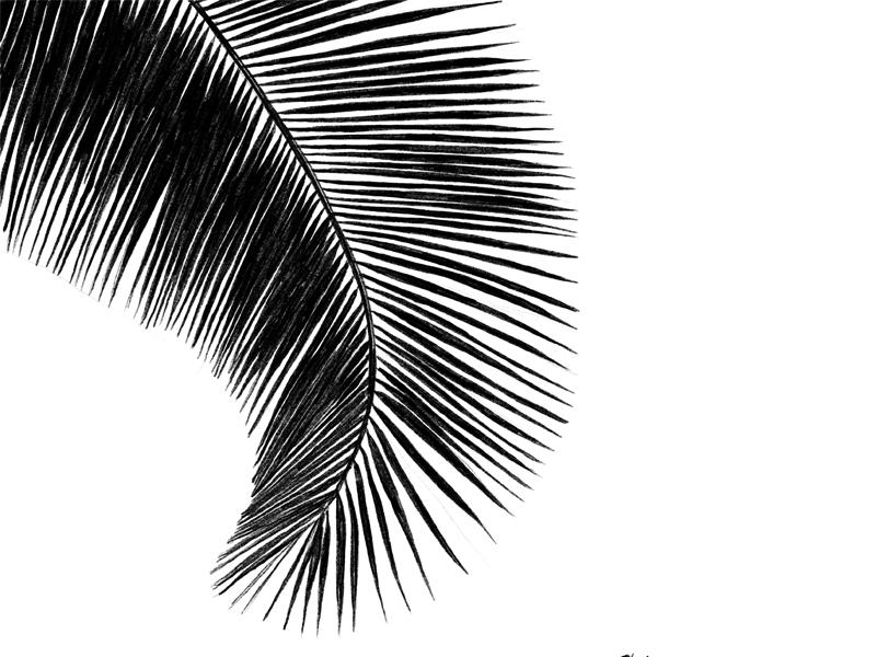 Palm017 dribble