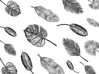 Palm Leaves Exploration leaves plants pencil illustrator procreate sketch white black palms palm trees illustration