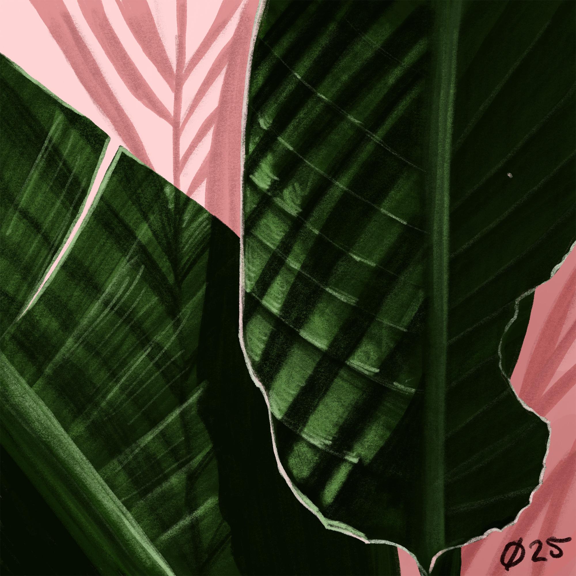Palm025