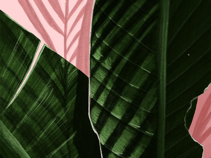 Palm Leaf Shadows sketch drawing procreate illustrator leaves palm leaves palm shadow illustration
