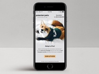 Pawster Pets Newsletter