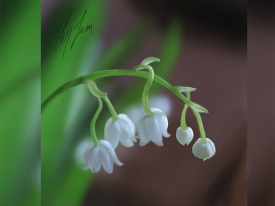 Lily of the valley - Digital Painting flower illustration flowers illustration digital art photoshop digital illustration digital painting digitalart