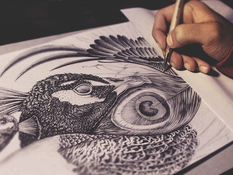 PEACOCK realistic details inking pencil drawing pencil illustration fineart drawing ink pencils illustration peakcock