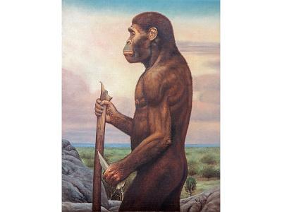 Australopithecus africanus prehistoric reconstruction paleontology painting oil painting paleoart