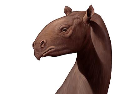 Indricotherium illustration extinct animal paleontology painting paleoart