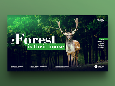 Web design | Animals