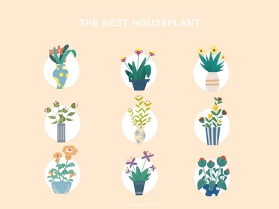 THE BEST HOUSEPLANT