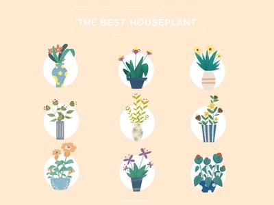 THE BEST HOUSEPLANT