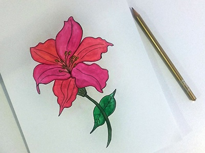 Lilium Flower flower lilium painting aquarelle watercolor