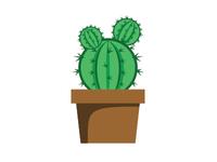 Cactus plant on pot