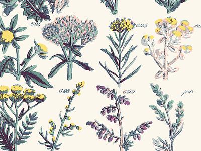 Floral Print Pattern botanical printing floral licensing flowers pattern design drawing illustration