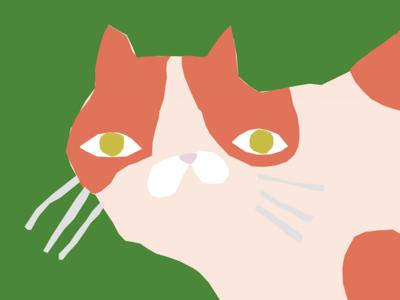 Wonky Kitten <3