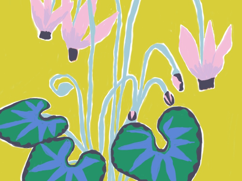 Hardy Cyclamen botanical floral painting gouache flowers drawing illustration
