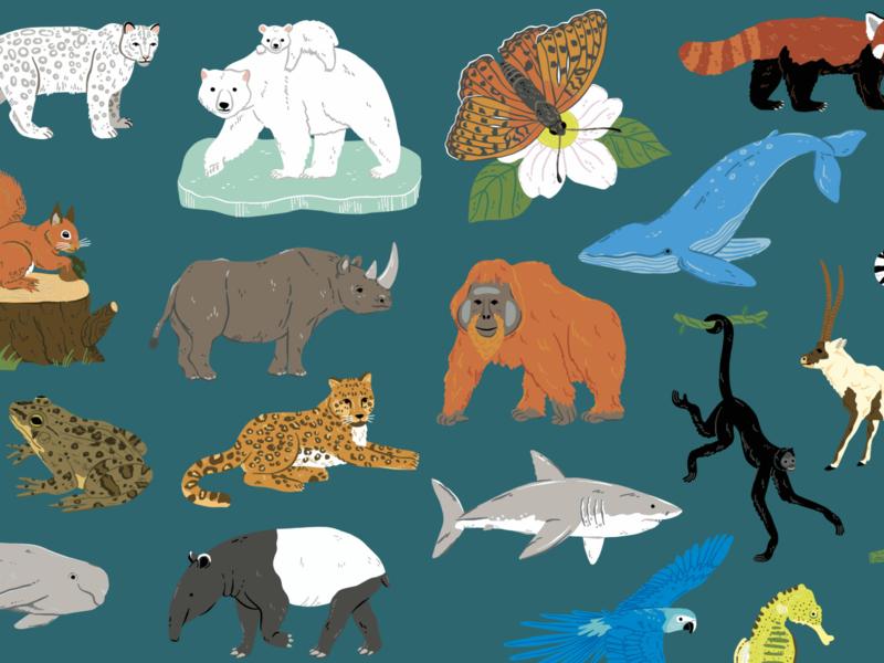 Endangered Animals Illustrations illustration butterfly frog monkey leopard tapir vector polar bear whale parrot shark orangutan rhino animals illustrated animals