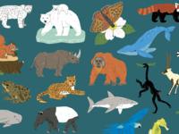 Endangered Animals Illustrations