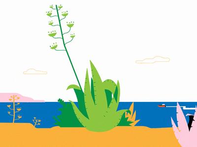 Nazaré summer cactus ocean nazaré beach portugal landscape homepage illustration