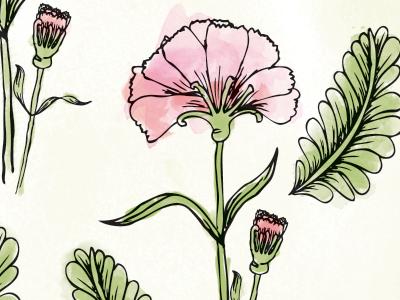 Pink Carnations carnations flowers ink watercolor digital pink plant flower illustration hand drawn pattern