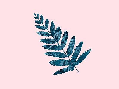 Fern digital art artwork illustration nature leaf fern