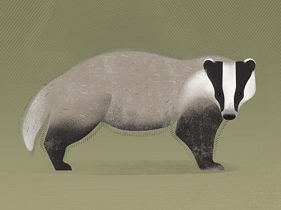 Badger forest illustrationart forest animals badger nature art graphic design design illustration artwork