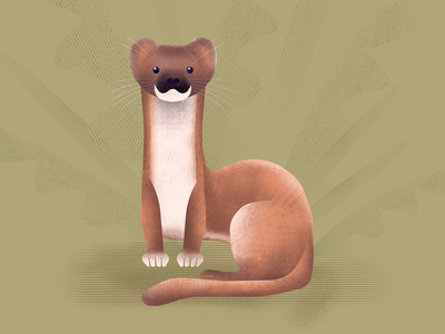 Weasel asterysk studio nature graphic design graphic artwork illustration wildlife forest animals animal weasel