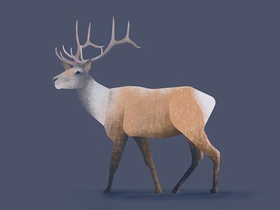 Dear deer deer wild life animals illustration forest forest animals nature design artwork art