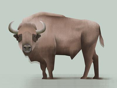 European bison wildlife nature illustration forest animals forest european bison artwork art animals