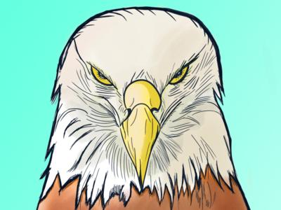 Eagle sketch draw color eagle illustration