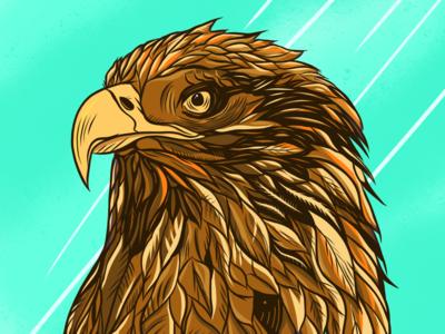 Eagle eagle sketch draw animal like follow artist illustrator ilustration