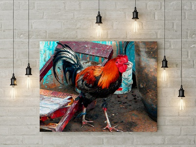 Mister Rooster