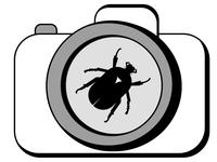 BuggyPixel Logo