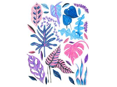Herbarium coloured pencils illustration art surface pattern design editorial design pot plant gardening botanical illustration