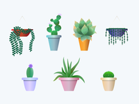 Succulents Set