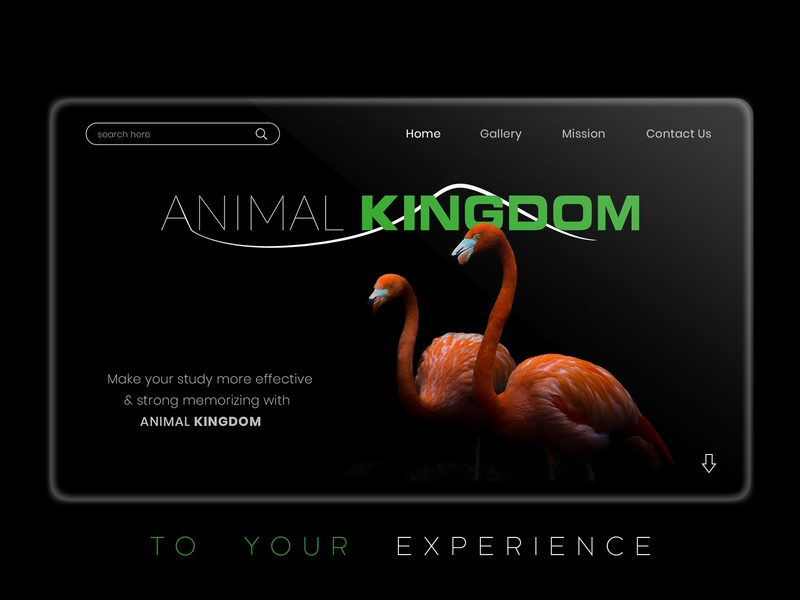 Animal Kingdom unique creative typography branding design experience study sanctuary bird ux design ui design home screen web site tablet app green black theme kingdom animal web page home page design