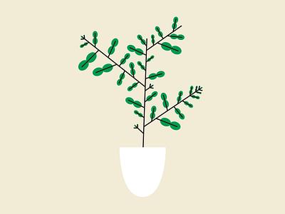 Citrus Hystrix makrut hystrix citrus tree lime plant illustration