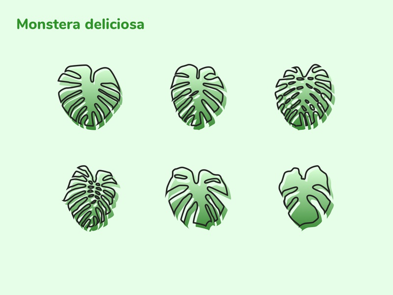 Monstera deliciosa icons minimalist sketchapp vector icon illustration ui