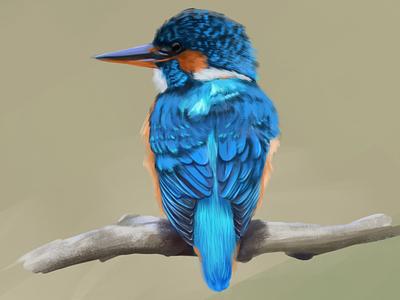 Halcyon digital painting illustration photoshop halcyon bird illustration digital art digital painting