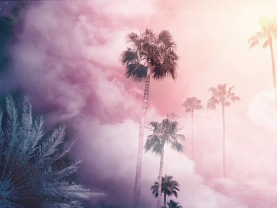 Sky, Meet Palms | Suncoast Series - EDIT ANIMATION user interface ui design palmtree pink photographer photoediting interaction digital art art editing tutorial animation interactiondesign series digital design animation photoshop photoeditor photoedit photography