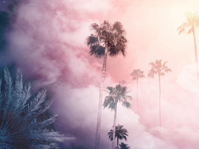 Sky, Meet Palms | Suncoast Series art tropical palm trees sky purple pink clouds photo edit photoshop photography concept design interaction ui design ui digital animation design illustration interactiondesign