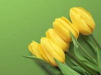 5 Free Tulips Wallpapers