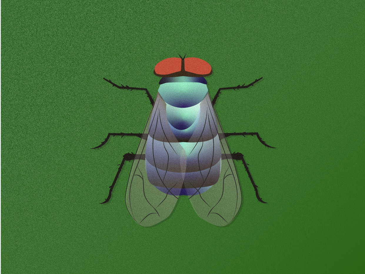 Fly fly vector illustration