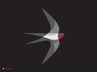 swallow at night