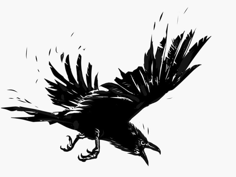 On the attack vector art illustration digital art bw attack raven
